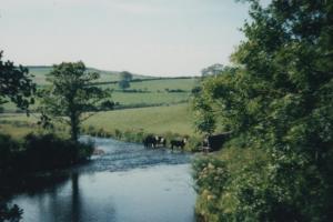 Rural-scene1